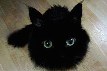 15 Photos Of Black Cats Who Are Actually Toothless Cute Cats