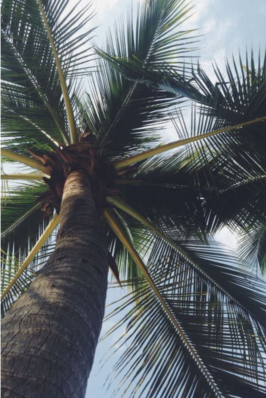 Aesthetic Pictures Palm Trees