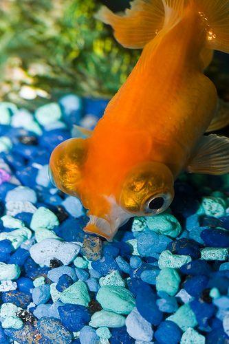 Vacuum Cleaner Fresh Water Fish Tank