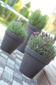 Doniczka Massive Mrozoodporna Dbc35 Mocca Planters Plants Planter Pots