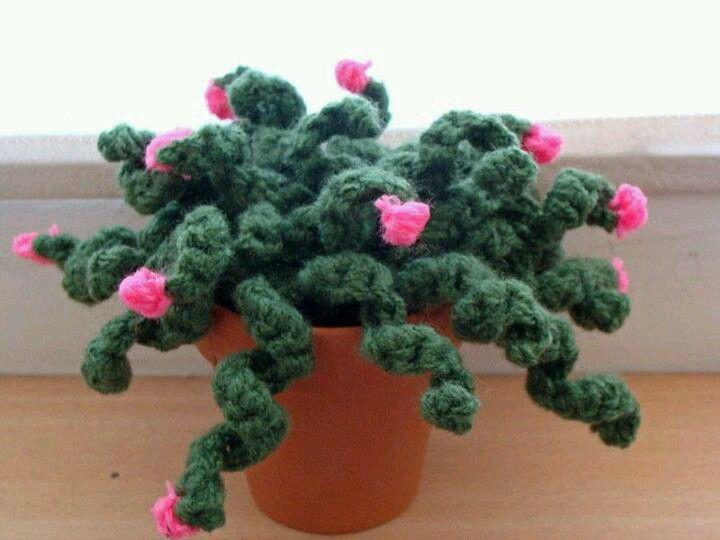 Pin di tina su piante grasse pinterest for Piante grasse uncinetto