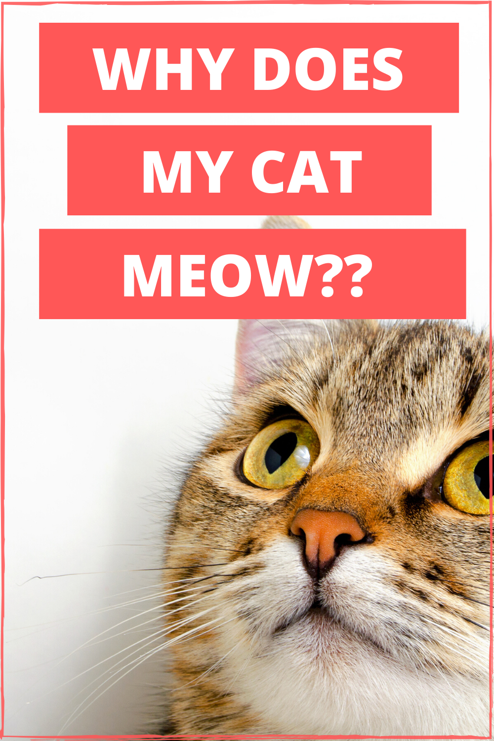 Why Does My Cat Meow Live Long And Pawspurr In 2020 Cat Quotes Kitten Adoption Cats