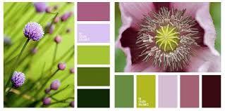 """Результат пошуку зображень за запитом """"цветовые сочетания в природе"""""""