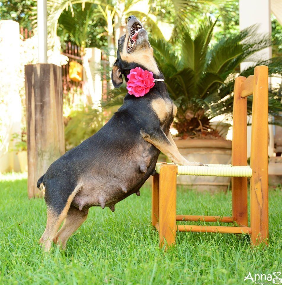 Dog mom-to-be slays her maternity shoot, gives birth a day later.