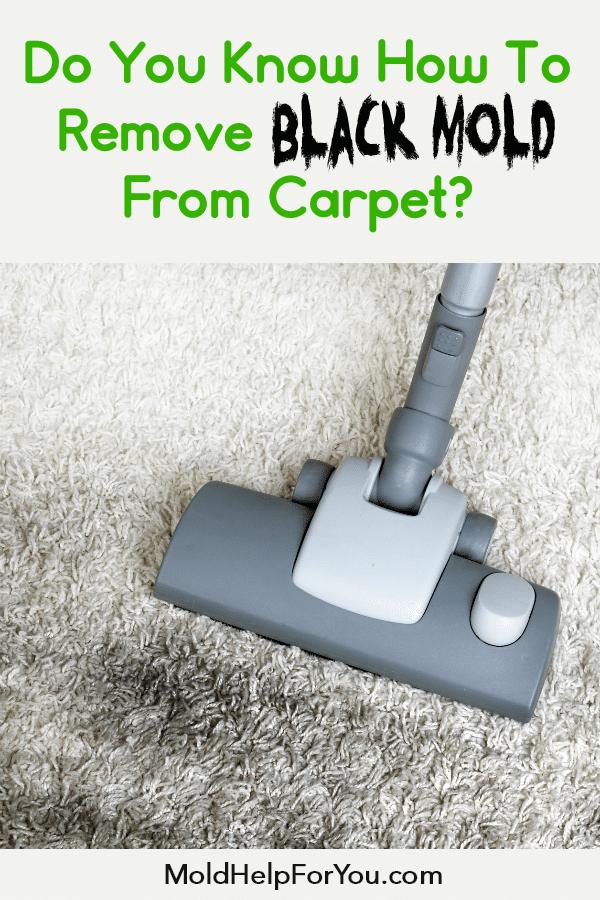 cb74b5d7b6d32783aebd95c85e9c7169 - How To Get Rid Of Mold Out Of Carpet