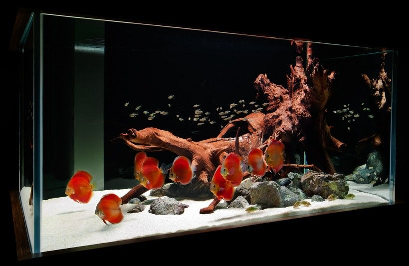 Aquascapes Red Discus Hardscape Simple Tank Driftwood ...