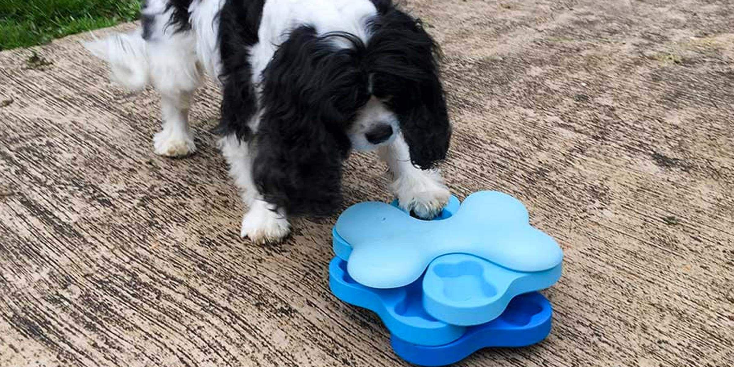 Review Nina Ottosson Dog Tornado An Interactive Dog Toy Dog