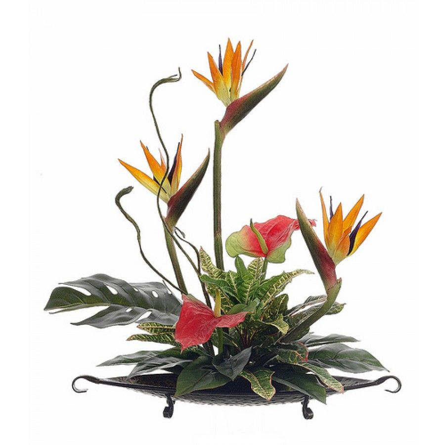 an overview of the exotic flower the bird of paradise flower These magnificent long-lasting flowers are highly prized for their durability and  exotic beauty from the majestic bird of paradise to lavish orchids, tropical.