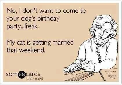 Dog birthday party but cat is getting married that weekend ecard funny lol joke phone