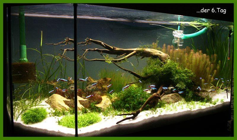 Mein Naturaquarium nach Vorbild Takashi Amano zu Beginn ...