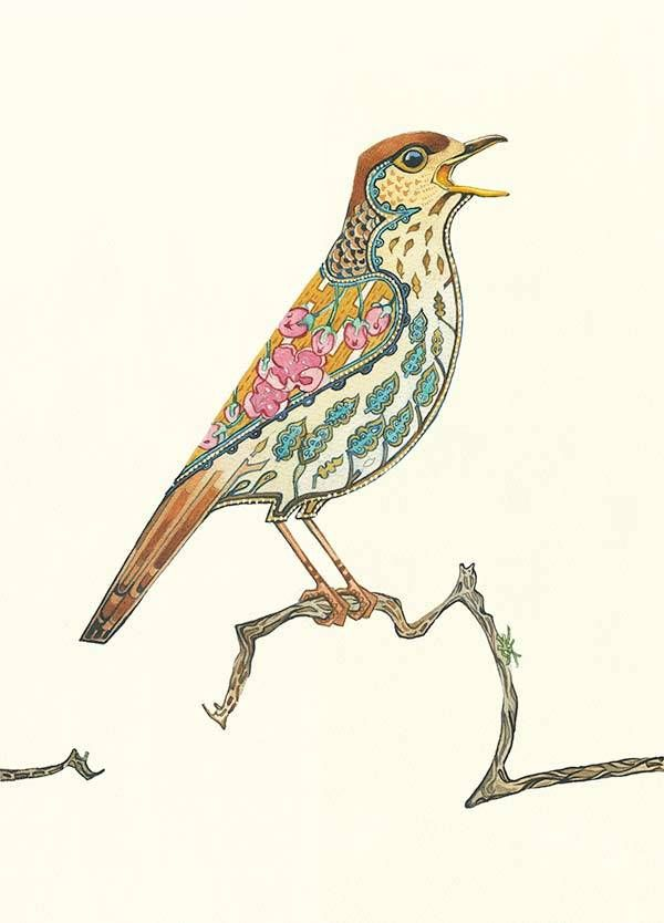Image of Song Thrush Card | Daniel Mackie