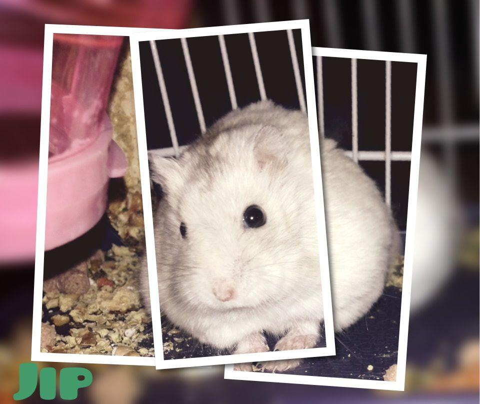 Mijn hamster Jip
