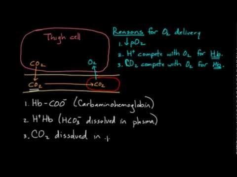 Hemoglobin moves O2 and CO2 - YouTube | Nursing | Anatomy