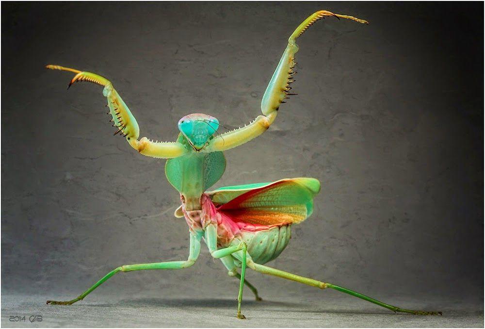Le monde merveilleux des insectes Cb77ac39cdae83372ba1f85b2d34207e