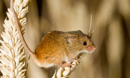 5 Humane Ways To Get Rid Of Mice My Favorite In This List Is The