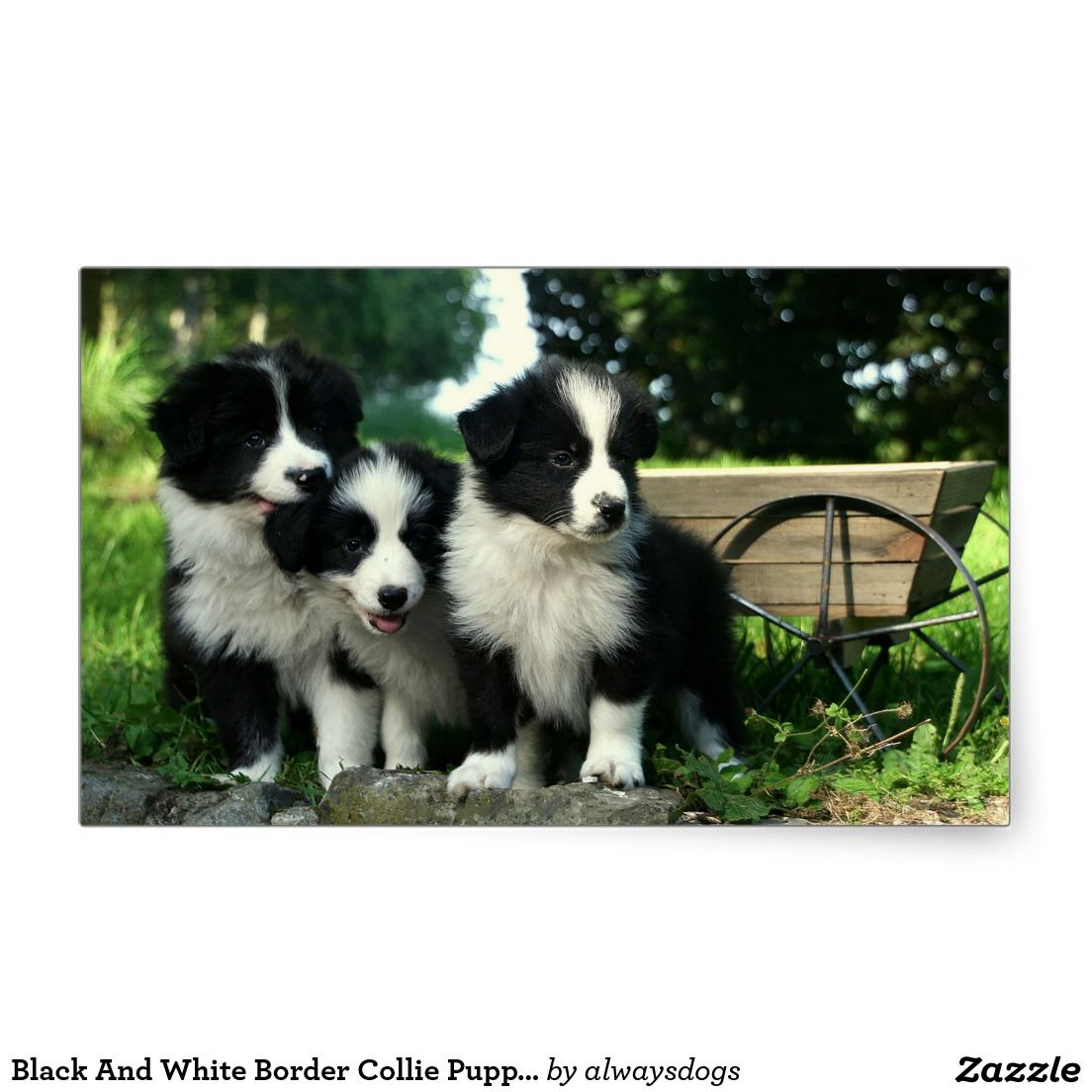 Black And White Border Collie Puppy Dogs Stickers Zazzle Com
