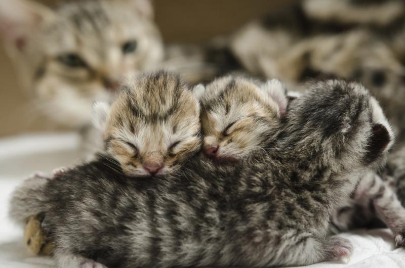 How To Take Care Of A 4 Week Old Kitten Cat Having Kittens Newborn Kittens Kitten Pictures