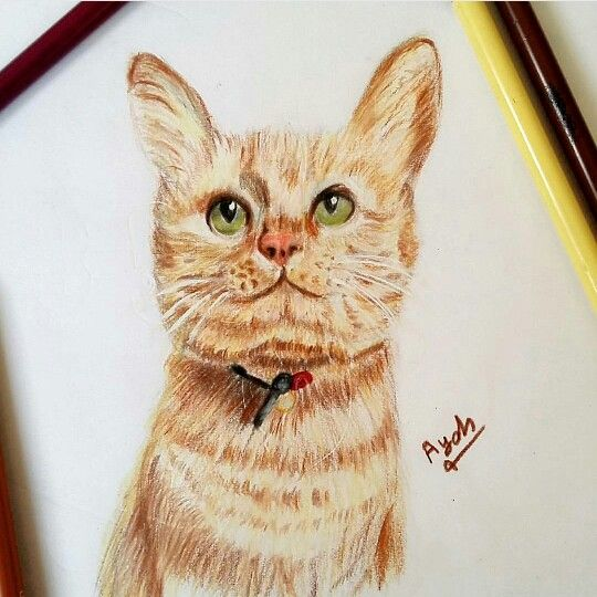 fabercastell polychromos  my drawings drawings art