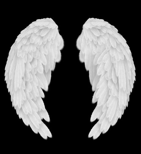 angel wings - Google Search | Ailes | Angel pictures ...