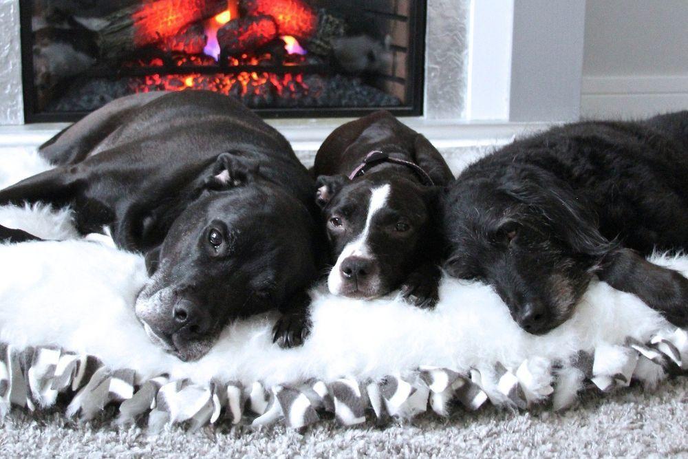 Diy Faux Fur Dog Bed No Sew Faux Fur Dog Beds Diy Dog Bed Dog Bed