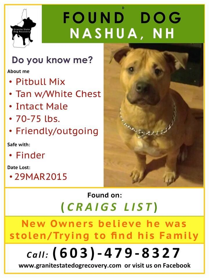 29mar2015 Found Nashua Nh Pitbull Mix Tan W White Chest