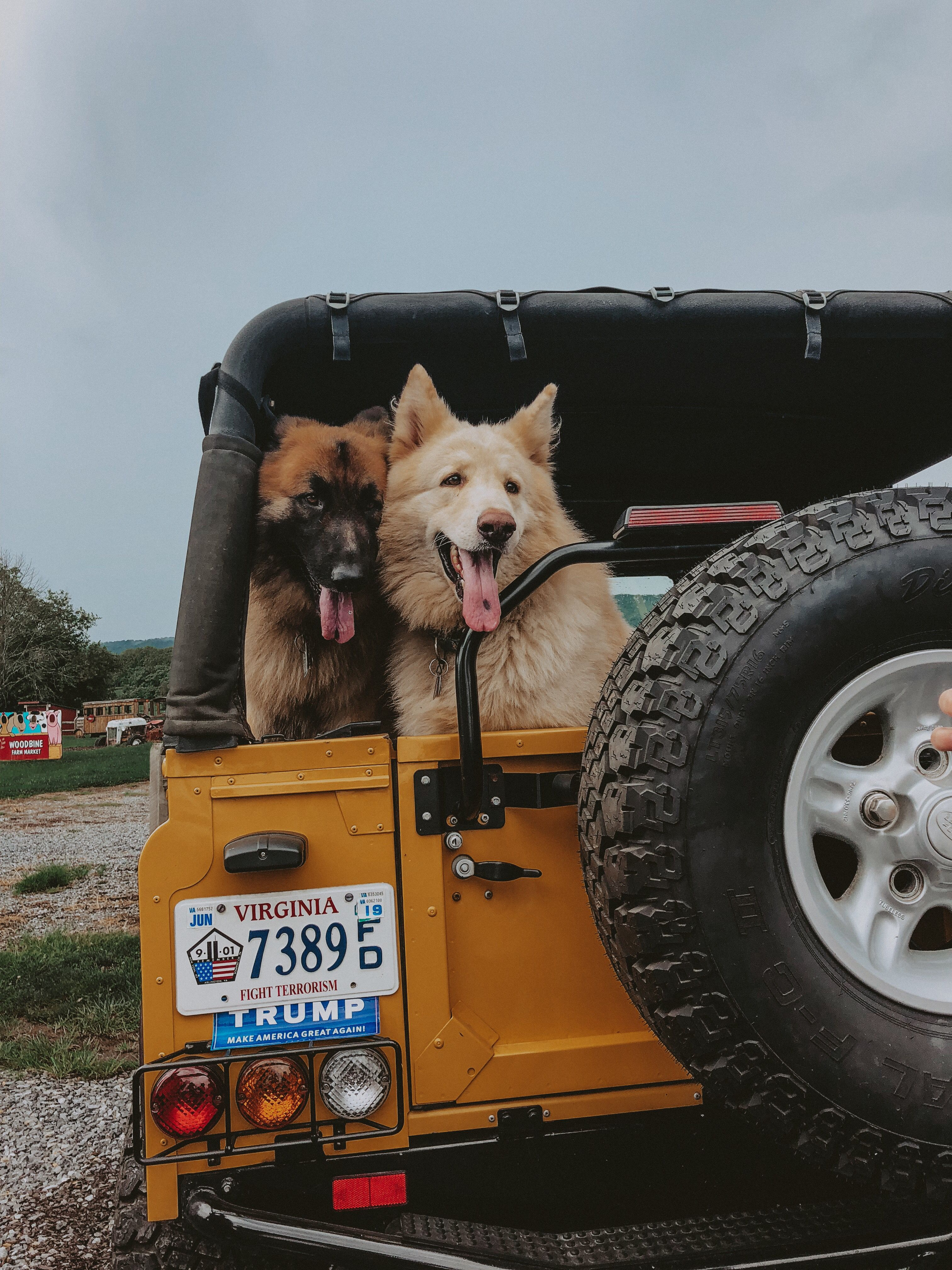 Pin By Hannah On Dogs Jeep Dogs