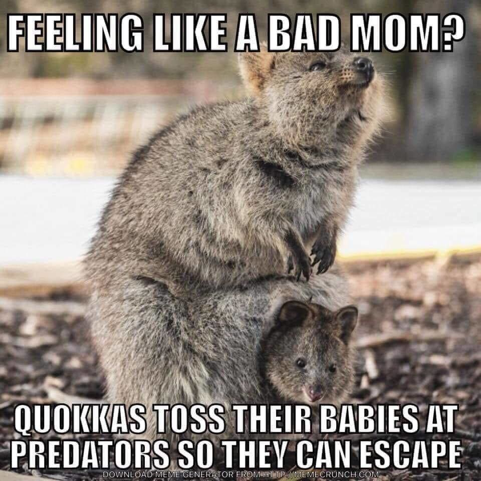 Scary Mommy On Instagram Annnd I M Doing Okay Mom Humor Bad Mom Parenting Memes