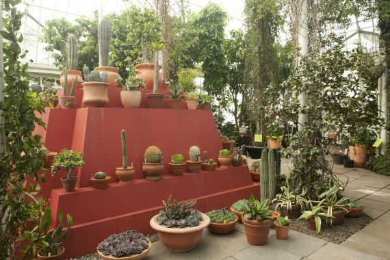 New Yorkers, Heres Your Chance To Visit Frida Kahlos Garden - Summer 2015 #NYBG