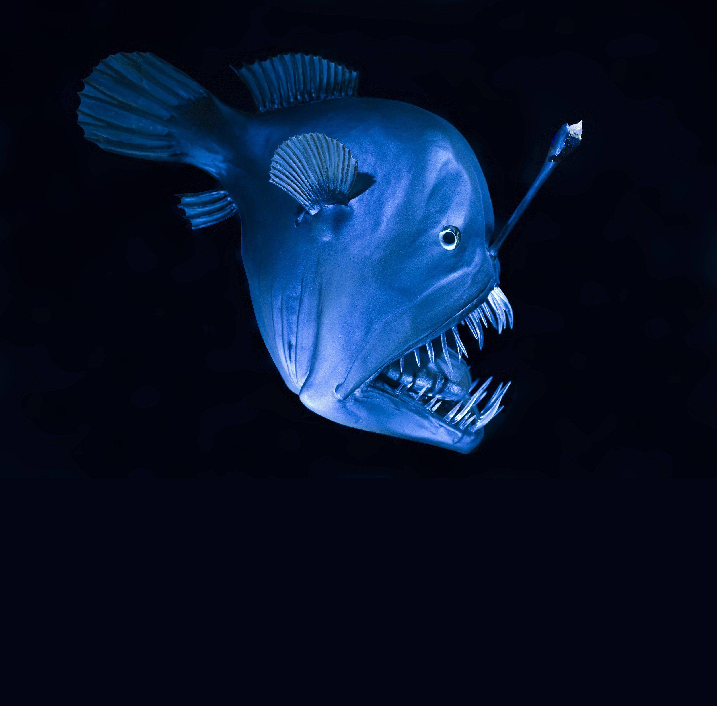 Monsterfisch