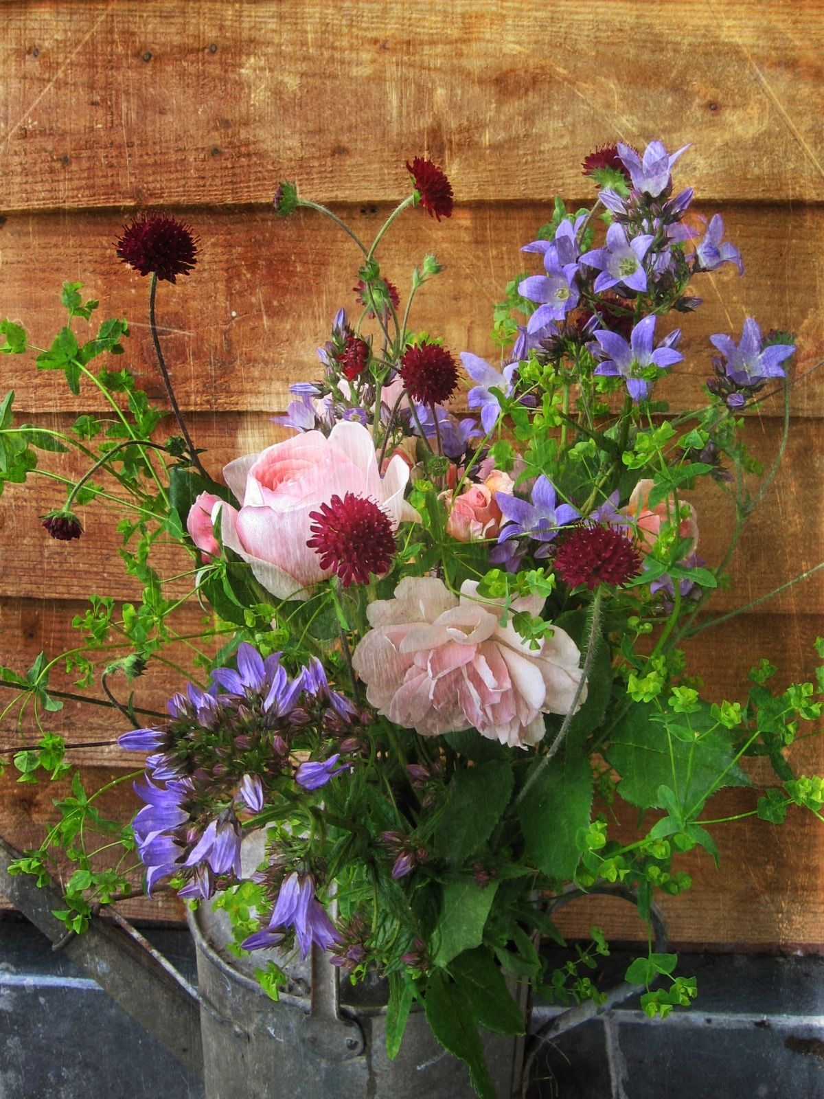 Watering can of roses and campanula British grown
