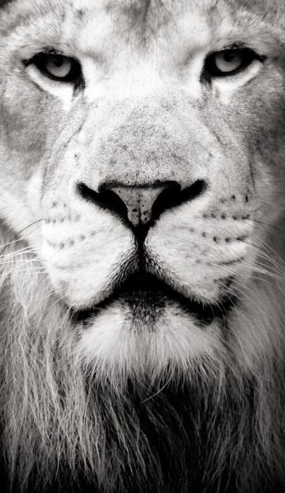 when the rest of the world is sheep, be a lion, it will teach you how to be fierce.