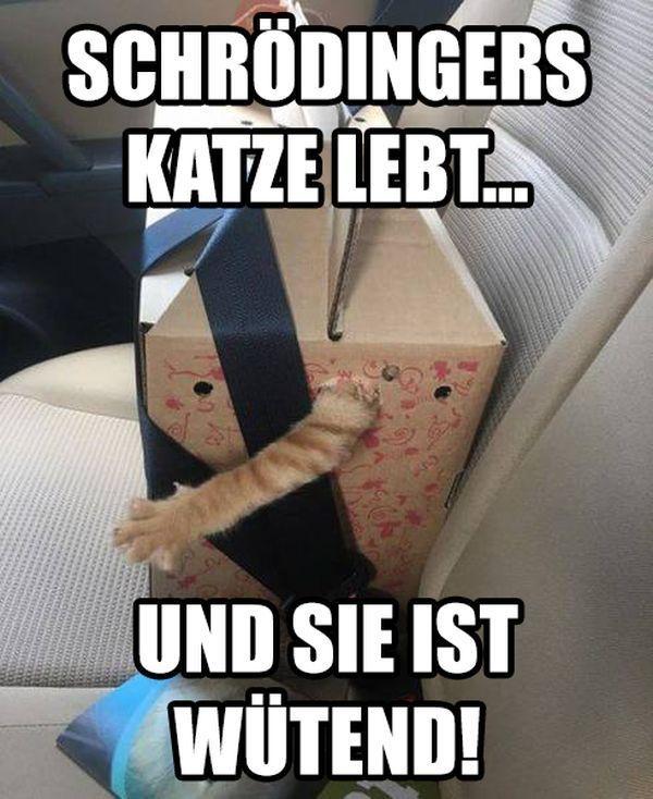 Gelöst: Das Rätsel um Schrödingers Katze #cuteanimalhumor