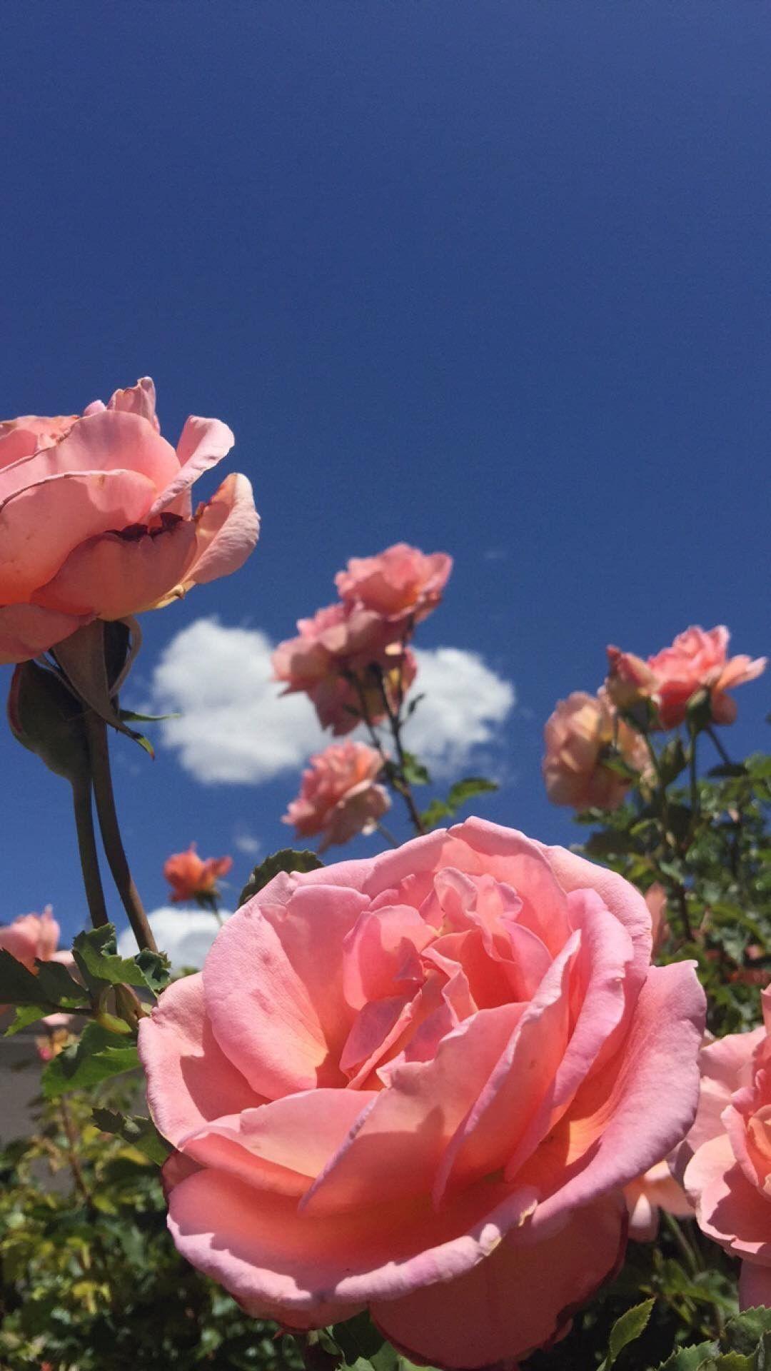 I Wanna Feel Love With Him Again Feel Love Wanna Flower Aesthetic Aesthetic Roses Blue Wallpaper Iphone
