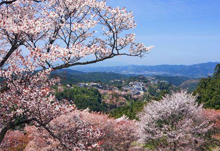 So Pretty Cherry Blossom Japan Japan Travel Vacation Trips