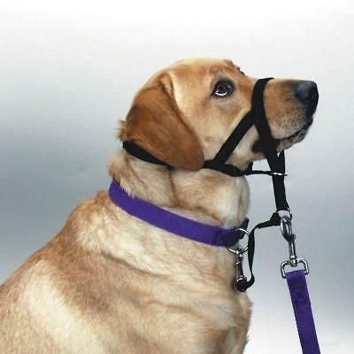 Halti No Pull Headcollar Harness For Dogs Train Your Dog To Walk