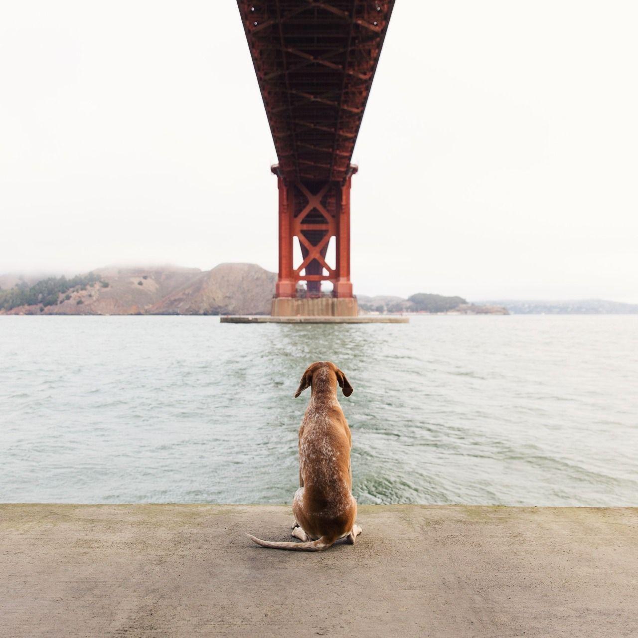 Maddie at the Golden Gate Bridge -- maddieonthings.com
