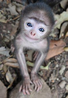 spider monkey - Google Search
