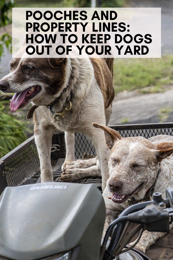 Pooches and Property Lines How to Keep Dogs Out of Your Yard Pooches and Property Lines How to Keep Dogs Out of Your Yard Cute pets puppy happy dog animals training dog f...