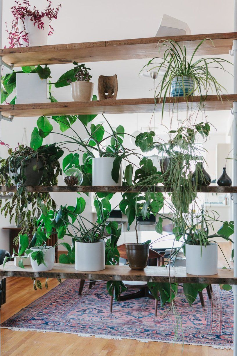 Sam u linseyus thoughtful chicago home plant rooms divider and plants