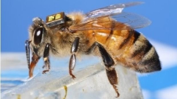 #Jet-lagged bees the key to better surgical recovery? - Sydney Morning Herald: Sydney Morning Herald Jet-lagged bees the key to better…