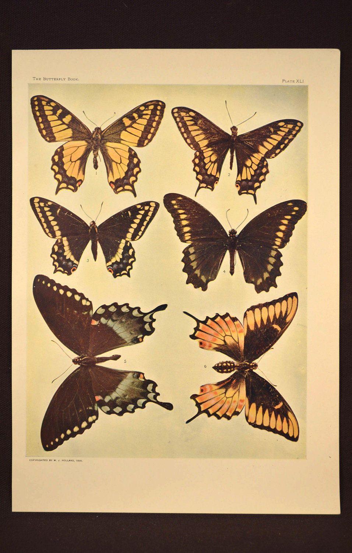 Butterfly Wall Decor Butterfly Wall Art Print Butterflies | Nature ...
