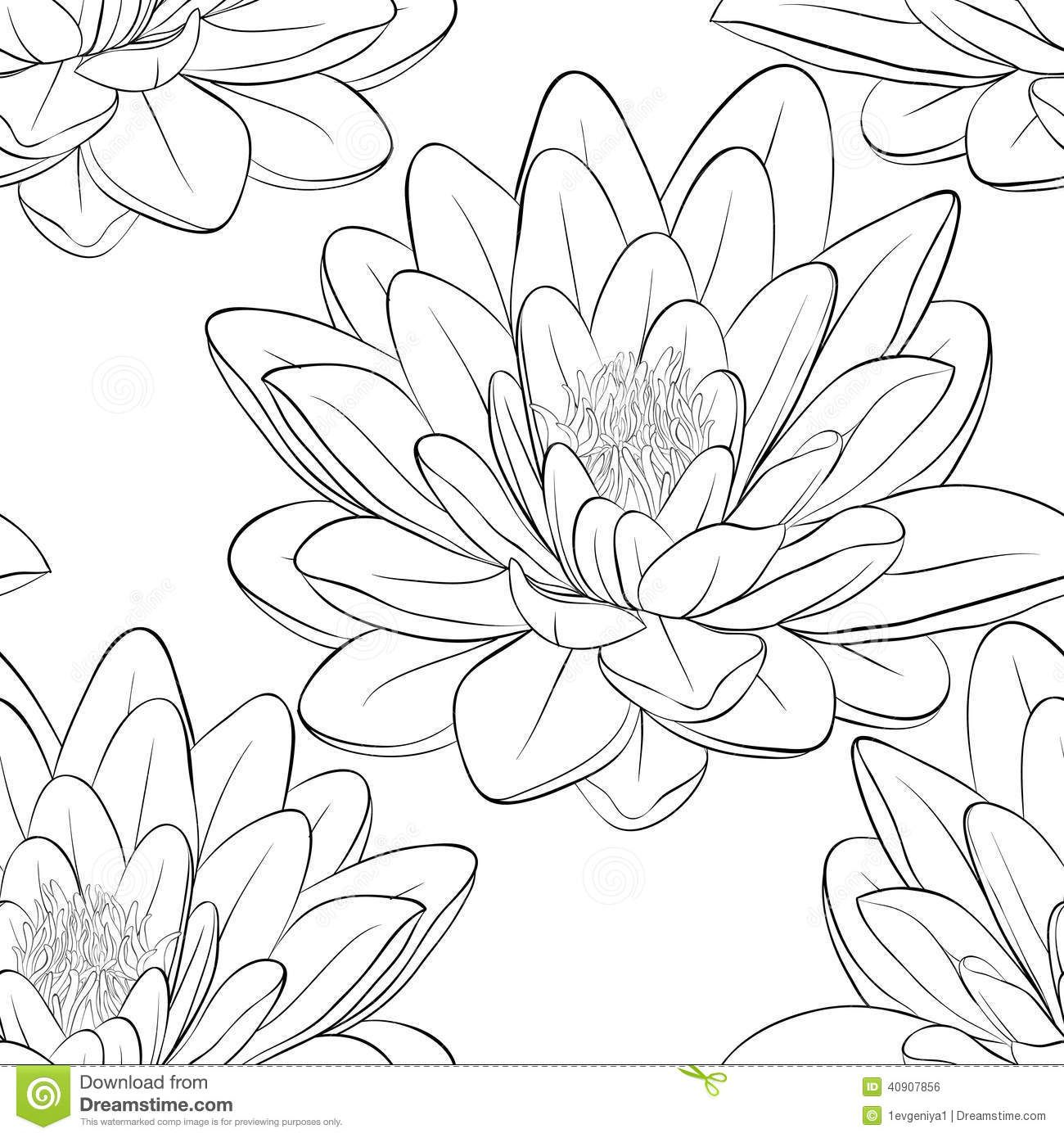 Japanese Lotus Flower Outline Lotus Flower Drawing Black Ink