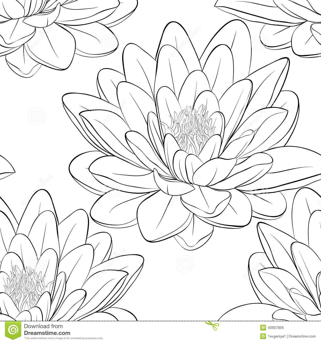 Japanese Lotus Flower Outline Lotus Flower Drawing Black