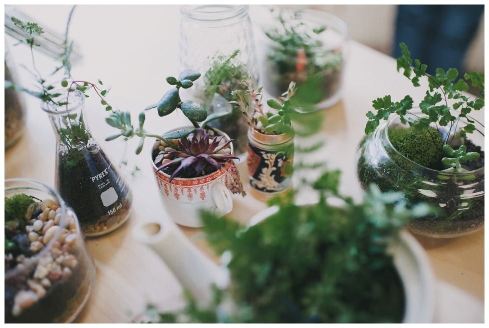 Terrariums! — Sarah Mason Photography