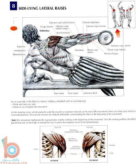 صور لتمارين عضلات الظهر والكتفين