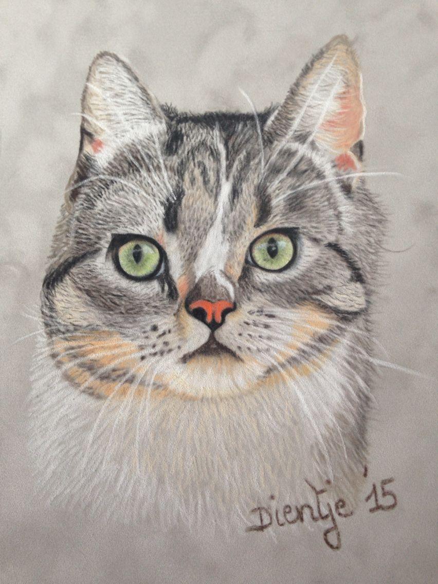 Cat on velvet by dientje's artwork