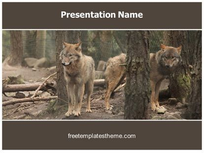 Get this free wolves powerpoint template with different slides get this free wolves powerpoint template with different slides for you upcoming toneelgroepblik Gallery