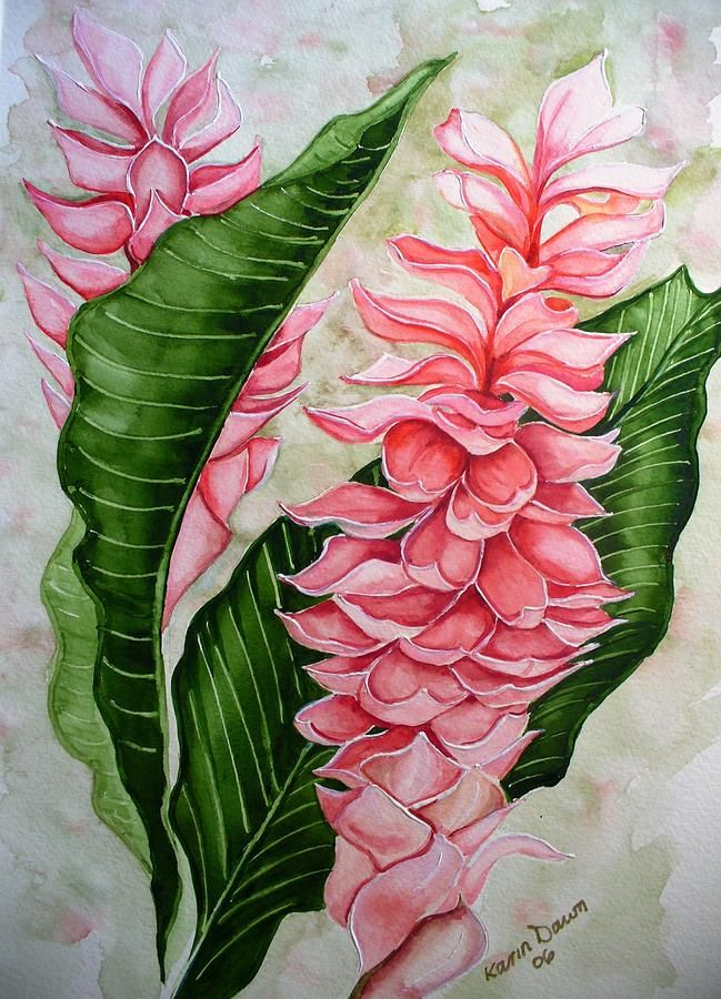 Pink Ginger Lilies Tropical Art Print Flower Painting Flower Drawing