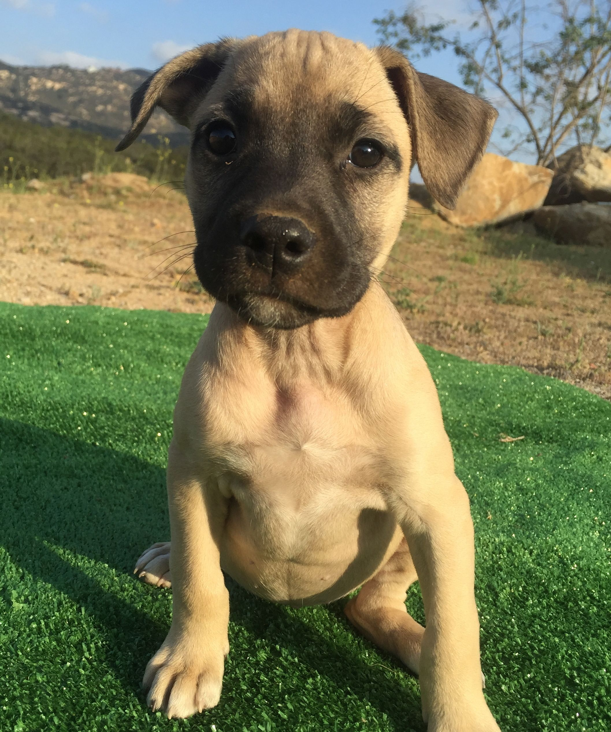 California labradors retrievers more rescue dogs