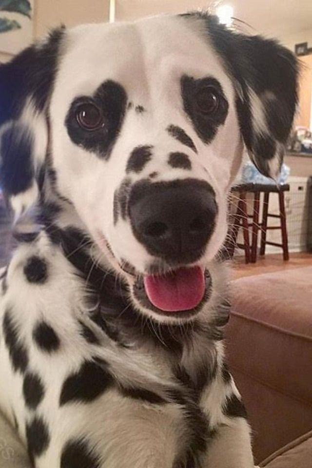 Pin Von Anna Auf Cute Dogs In 2020 Tiere Hund Niedliche Tiere Tiere